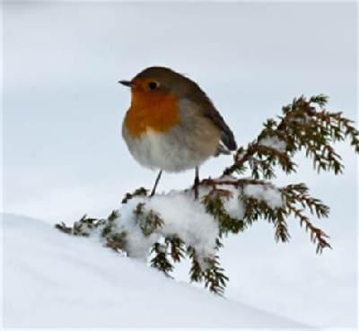 BirdsInWinter.jpg